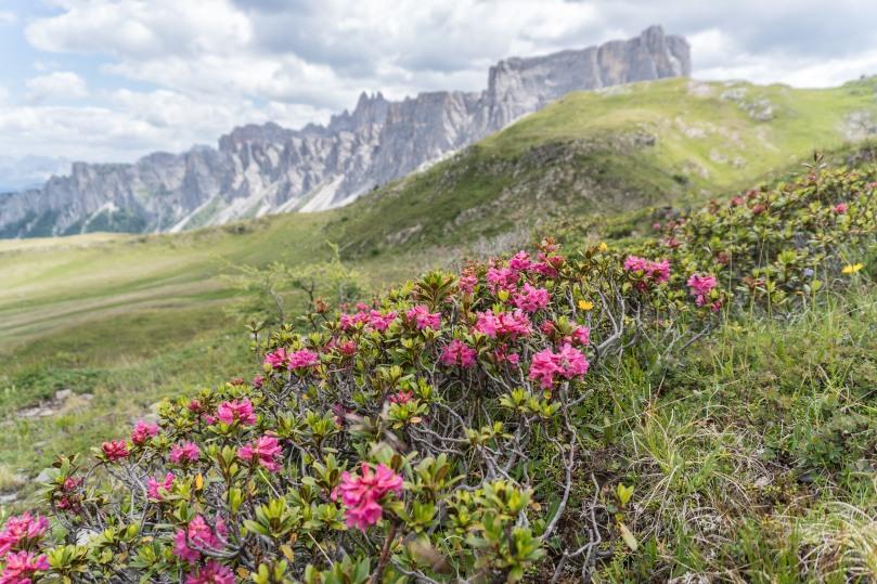 20170708-Alta Via 1 Dolomites-030